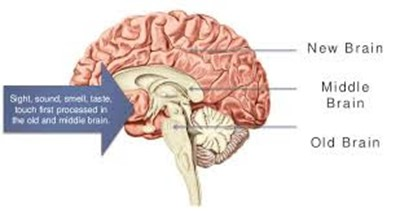 Cérebro Neuromarketing